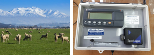 New Zealand Lamb Weighing System